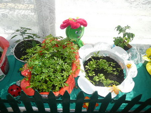 Детский огородик на окне…